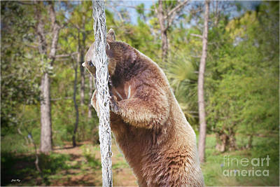 Animals Photograph - Woody by Judy Kay