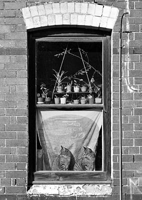 Photograph - Woolloomolloo Window With Cats by Barry Culling