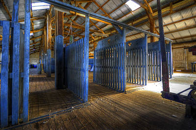 Photograph - Woolshed Blues by Wayne Sherriff
