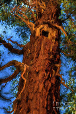 Photograph - Wooly Bear Tree by Sharon Seaward
