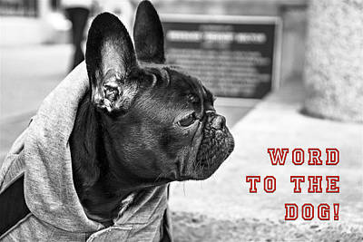 Photograph - Word To The Dog by ISAW Gallery