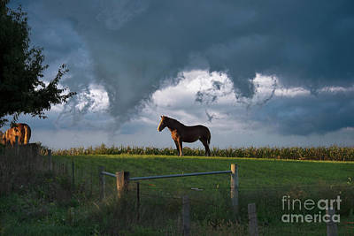 Photograph - Work Horse In Last Light by David Arment