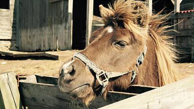 Animal Shelter Photograph - Work Horse - Windblown Mane by Jason Freedman