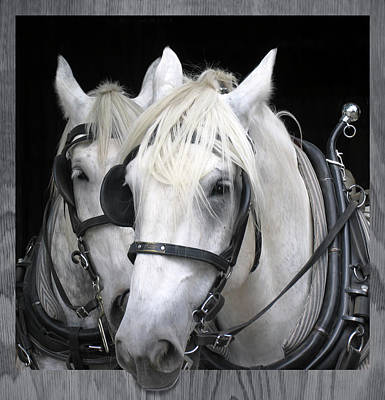 Work Horses - Equine Portrait Art Print by Rayanda Arts
