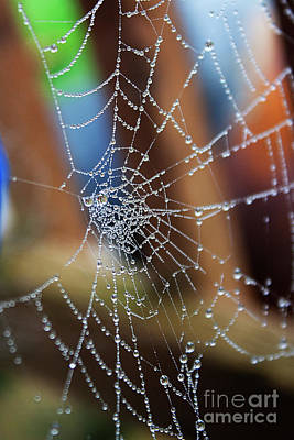 Photograph - Work In Progress 1 - Spider Web by Janie Johnson
