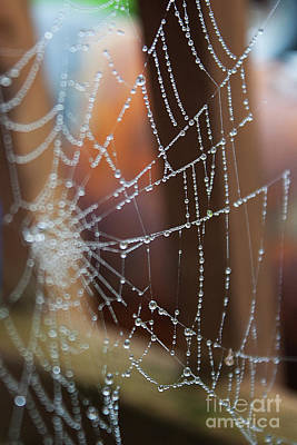 Photograph - Work In Progress 2- Spider Web by Janie Johnson