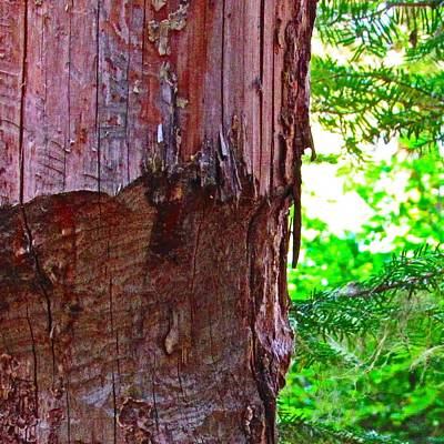 Nature Photograph - Work Of The Busy Beaver by Julie Pacheco-Toye