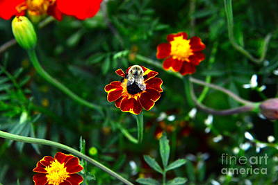 Photograph - Worker Bee by Jesse Ciazza