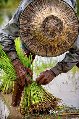 Lee Craker Royalty-Free and Rights-Managed Images - Worker Transplanting Rice by Lee Craker