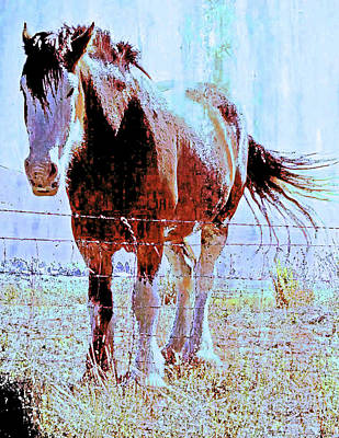 Photograph - Workhorse by Cynthia Powell