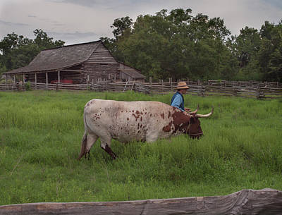 Art Print featuring the photograph Working Farm Oxen by Joshua House