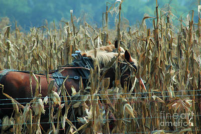 Photograph - Working For The Farm Human by Wilma Birdwell