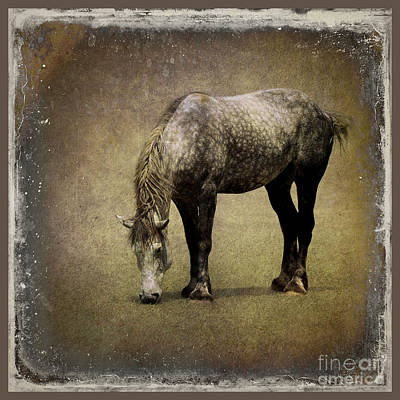 Draft Horses Photograph - Working Horse by Sari Sauls