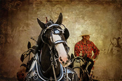 Working Cowboy Photograph - Working Horses by Mary Hone