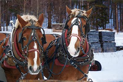 Unicorn Dust - Working in a Winter Wonder Land by Michael Peychich