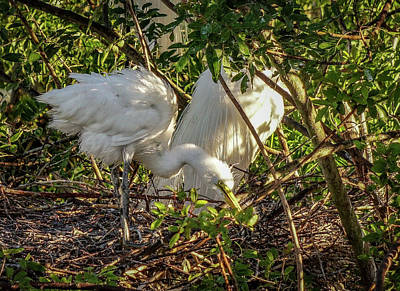 Photograph - Working On The Nest by Jane Luxton