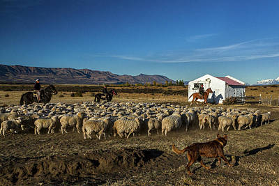 Photograph - Working On The Sheep Ranch #2 - Patagonia by Stuart Litoff