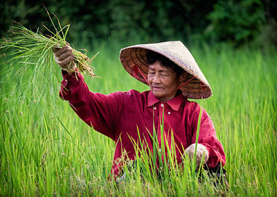 Lee Craker Royalty-Free and Rights-Managed Images - Working the Fields, Thailand by Lee Craker