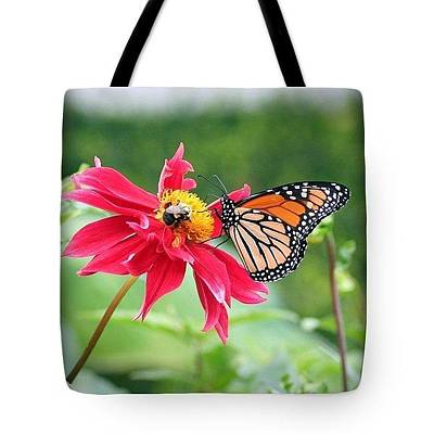 Butterfly Photograph - Working Together Tote Bag by Karen Silvestri