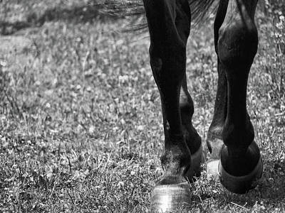 Working Trot Art Print by JAMART Photography