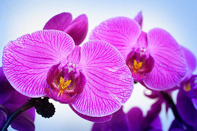 Photograph - World In Purple by Milena Ilieva