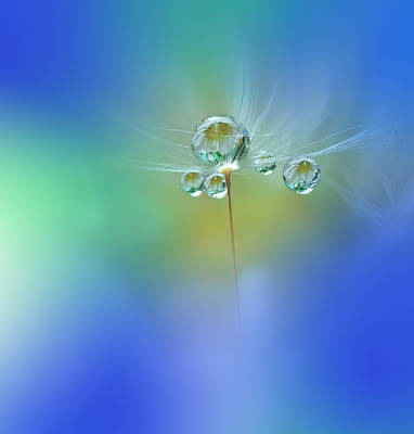 Flora Wall Art - Photograph - World Of Drops by Juliana Nan