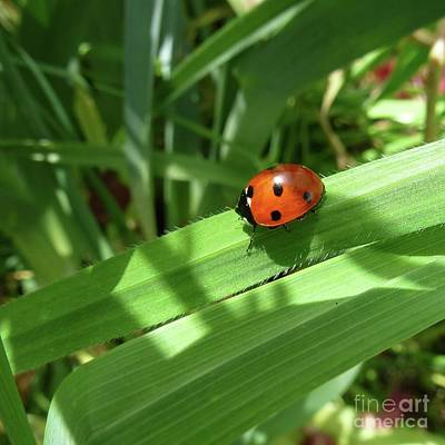 World Of Ladybug 1 Art Print by Jean Bernard Roussilhe