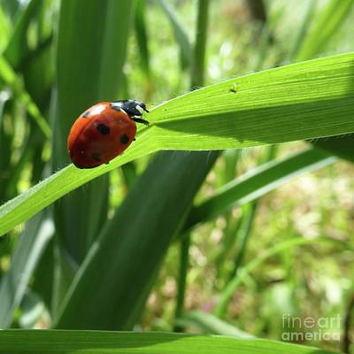 Photograph - World Of Ladybug 2 by Jean Bernard Roussilhe