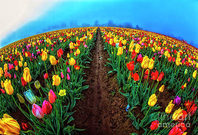 Photograph - World Of Tulips by Billie-Jo Miller