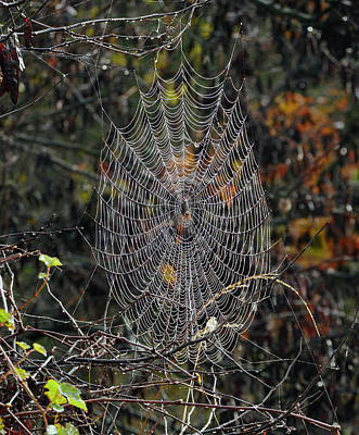 Photograph - World Of Webs by Paul Ross