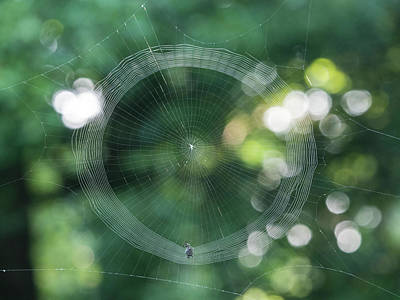 Photograph - World Wide Web by Paul Ross