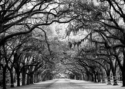 Photograph - Wormsloe by E B Schmidt