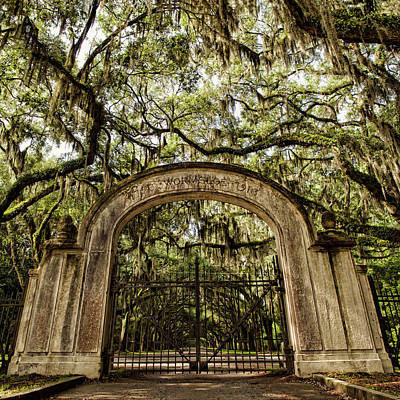 Photograph - Wormsloe Entrance by Heather Applegate