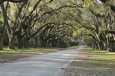 Photograph - Wormsloe Entrance Road by Bradford Martin