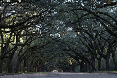 Photograph - Wormsloe  by Mike Dunn