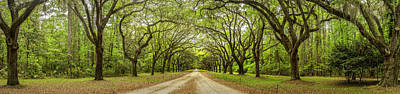 Georgia Plantation Photograph - Wormsloe Path by Jon Glaser