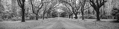 Photograph - Wormsloe Pathway by Jon Glaser