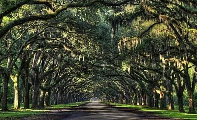 Photograph - Wormsloe Plantation  by Carol Montoya