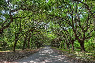 Photograph - Wormsloe Plantation Oak Lined Entrance I by Clarence Holmes