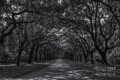 Photograph - Wormsloe Plantation Oak Lined Entrance II by Clarence Holmes