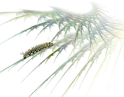 Insects Mixed Media - Wormwood by Jan Piller