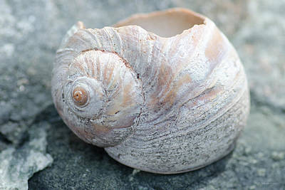 Photograph - Worn Shell by WB Johnston