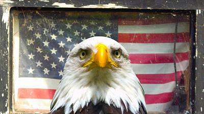 Photograph - Worried Eagle by Lynn Hansen
