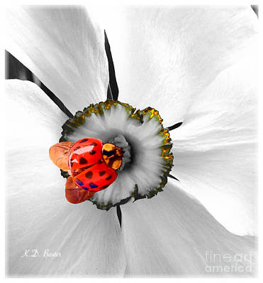 The Nature Center Mixed Media - Wow Ladybug Is Hot Today by Kimberlee Baxter