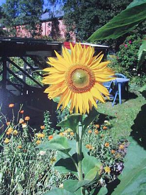 Flowers Photograph - Sunshine by Rosita Larsson