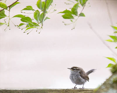 Wrens Photograph - Wren 3 by Rebecca Cozart