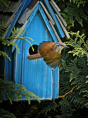 Photograph - Wren In Flight by David Kay