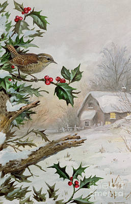 Wren In Hollybush By A Cottage Print by Carl Donner