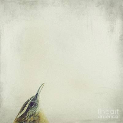 Wren Photograph - Wren by MingTa Li