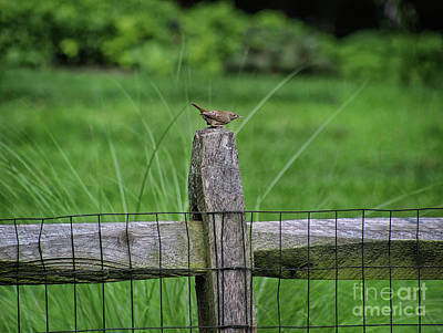 Photograph - Wren On A Fence by Karen Adams